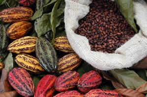 Kakaová plantáž Madagaskar